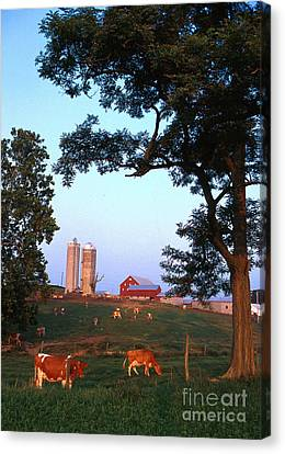Dairy Farm Canvas Print by Photo Researchers