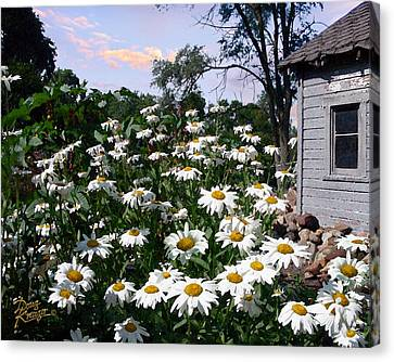Daisies Delight Canvas Print by Doug Kreuger