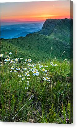 Daisies In The Mountyain Canvas Print by Evgeni Dinev