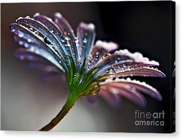 Daisy Abstract With Droplets Canvas Print by Kaye Menner