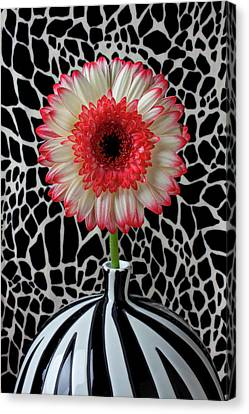 Daisy And Graphic Vase Canvas Print by Garry Gay