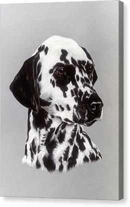 Dalmatian Canvas Print by Patricia Ivy