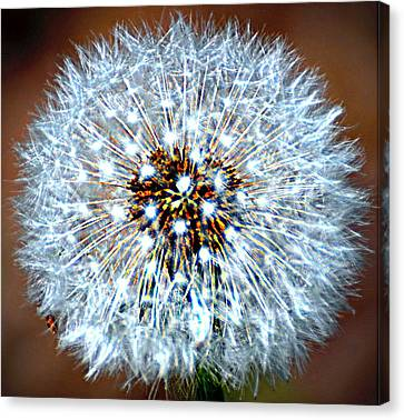 Dandelion Seed Canvas Print by Marty Koch