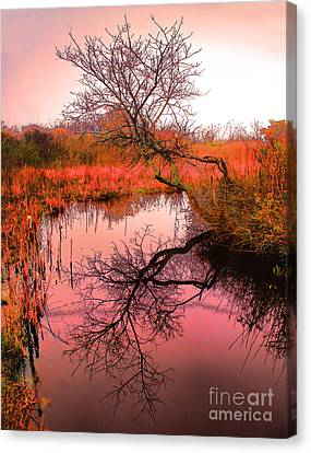 Dawn On The Marsh Canvas Print by Nick Zelinsky