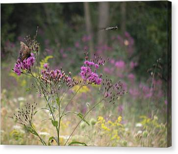 Day In The Meadow Canvas Print by Trendle Ellwood