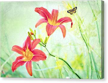 Day Lily Delight Canvas Print by Bonnie Barry