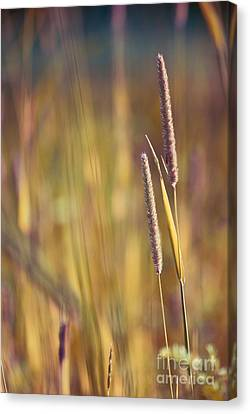Day Whisperings Canvas Print by Aimelle