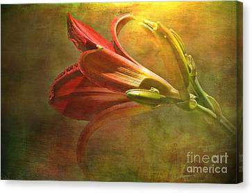 Daylily Photoart With Texture II  Canvas Print by Debbie Portwood