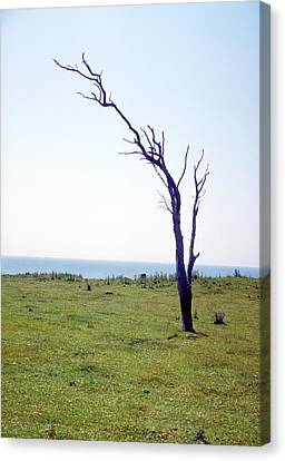Dead Tree Canvas Print by Victor De Schwanberg