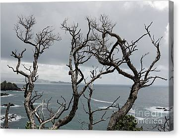 Dead  Trees Canvas Print by Yurix Sardinelly