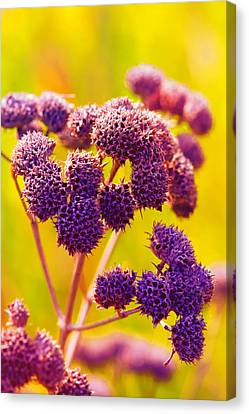 Dead Weed On Lime Canvas Print by Bill Tiepelman