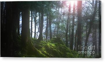 Deep Forest Canvas Print by Bruno Santoro