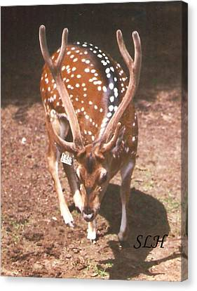 Deer Canvas Print by Lee Hartsell