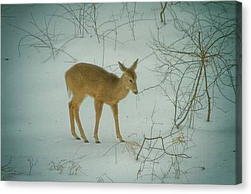 Deer Winter Canvas Print by Karol Livote