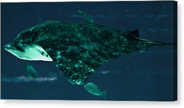 Depths Of Danger Canvas Print by DigiArt Diaries by Vicky B Fuller