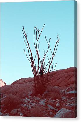 Desert Plant Canvas Print by Naxart Studio
