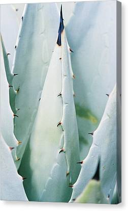 Desert Safety Canvas Print by