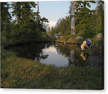 Dharma At The Pond Canvas Print by Shawn Hegan