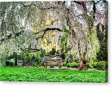 Digital Liquid -  Cherry Blossoms At The Washington National Cathedral Canvas Print by Metro DC Photography