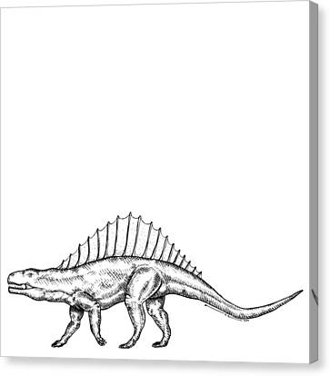 Dimetrodon - Dinosaur Canvas Print by Karl Addison