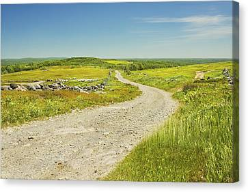 Dirt Road Going Through Large Blueberry Field Maine Canvas Print by Keith Webber Jr