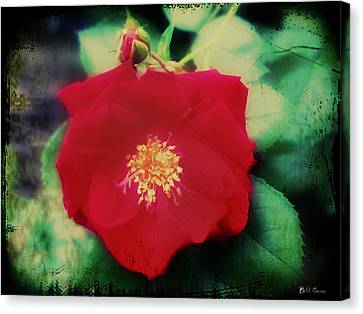 Dirty Rose Knows Canvas Print by Bill Cannon