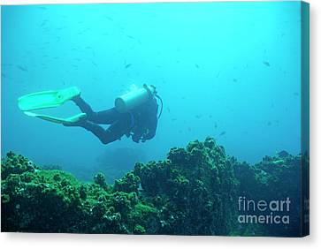 Diver By Rocks On Ocean Floor Canvas Print by Sami Sarkis