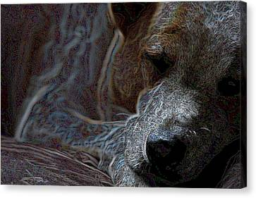 Do Not Disturb Canvas Print by One Rude Dawg Orcutt