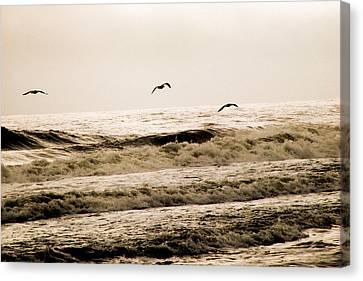 Dodging The Waves Canvas Print by Trish Tritz