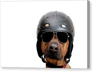 Dog Dressed As Police Man Canvas Print by Ty Foster