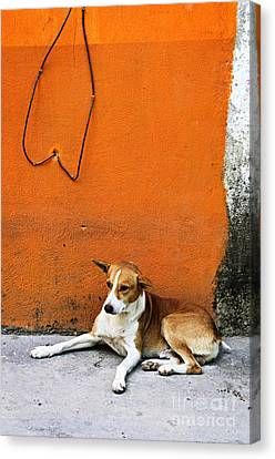 Dog Near Colorful Wall In Mexican Village Canvas Print by Elena Elisseeva