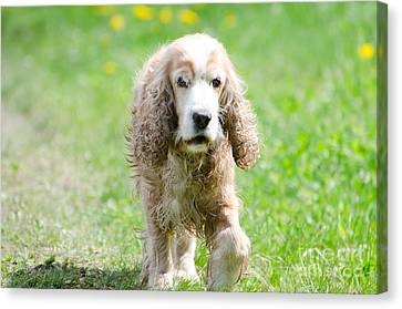 Dog On The Green Field Canvas Print by Mats Silvan