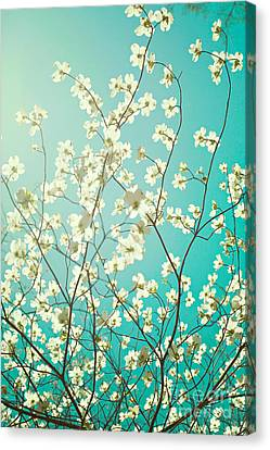 Dogwood Tree Canvas Print by Kim Fearheiley