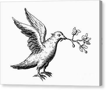Dove: Noahs Ark Canvas Print by Granger