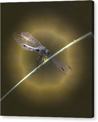 Dragonfly 1 Canvas Print by Judith Szantyr