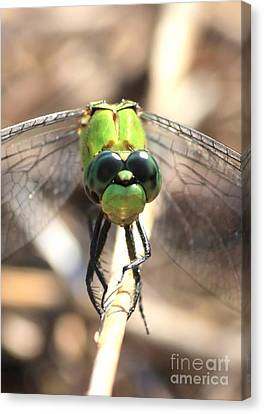 Dragonfly Perspective Canvas Print by Carol Groenen