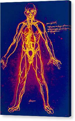 Drawing Of Human Venous System (leonardo Da Vinci) Canvas Print by Mehau Kulyk