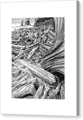 Driftwood Black Cat Canvas Print by Jack Pumphrey