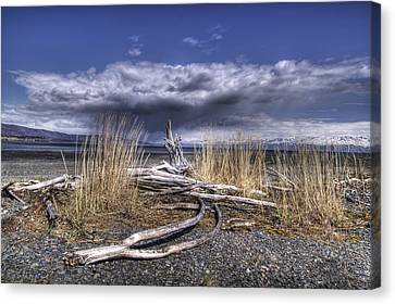 Driftwood By The Sea Canvas Print by Michele Cornelius