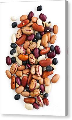 Dry Beans Canvas Print by Elena Elisseeva