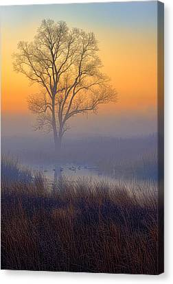 Ducks At Sunrise Canvas Print by Jay Sheinfield