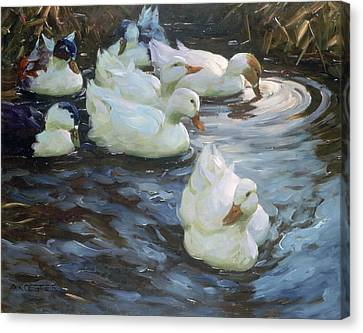 Ducks On A Pond Canvas Print by Photos.com
