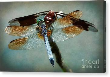 Dueling Dragonflies Canvas Print by Susan Isakson