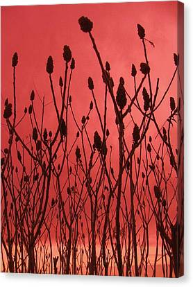Dusk Canvas Print by Todd Sherlock