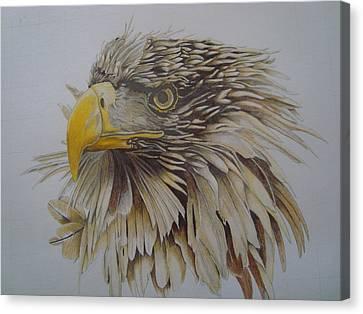 Eagel Canvas Print by Per-erik Sjogren