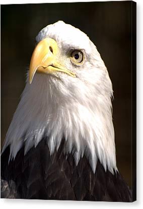 Eagle Eye Canvas Print by Marty Koch