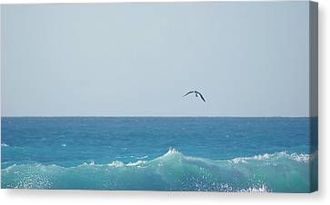 Eagle Flying Over Sea Canvas Print by Fabian Jurado's Photography.
