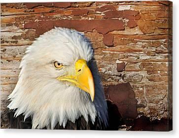 Eagle On Brick Canvas Print by Marty Koch
