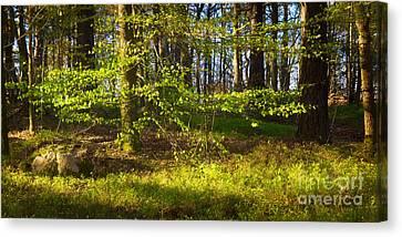 Early Green Canvas Print by Lutz Baar