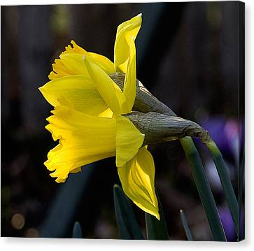 Early Spring Canvas Print by Michael Friedman